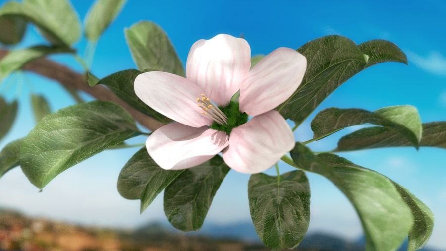 Apple Flower Bud / Branch - Rigged / Animated royalty-free 3d model - Preview no. 2