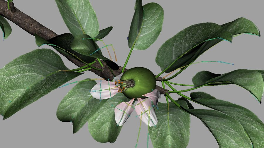 Apple Flower Bud / Branch - Rigged / Animated royalty-free 3d model - Preview no. 7
