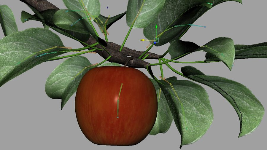 Apple Flower Bud / Branch - Rigged / Animated royalty-free 3d model - Preview no. 8