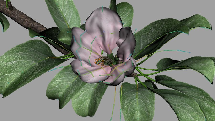Apple Flower Bud / Branch - Rigged / Animated royalty-free 3d model - Preview no. 4