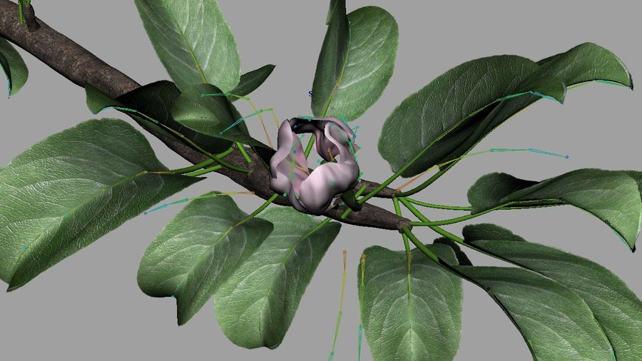 Apple Flower Bud / Branch - Rigged / Animated royalty-free 3d model - Preview no. 3