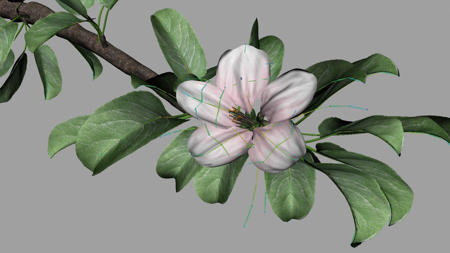 Apple Flower Bud / Branch - Rigged / Animated royalty-free 3d model - Preview no. 5