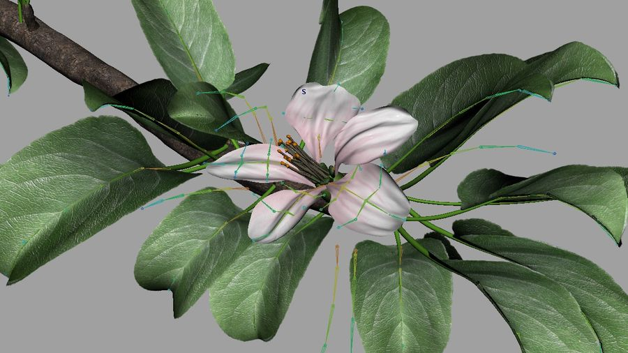 Apple Flower Bud / Branch - Rigged / Animated royalty-free 3d model - Preview no. 6