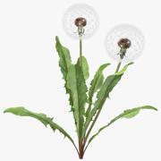 Dandelion Seed Head Plant 3d model