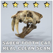 SABERTOOTH CAT SMILODON SCAN SKULL 3d model