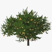 Grapefruit Tree 3d model