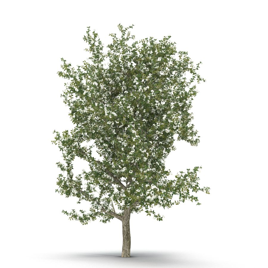 Perenboom Bloeien royalty-free 3d model - Preview no. 1