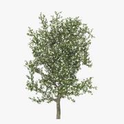 梨树开花 3d model