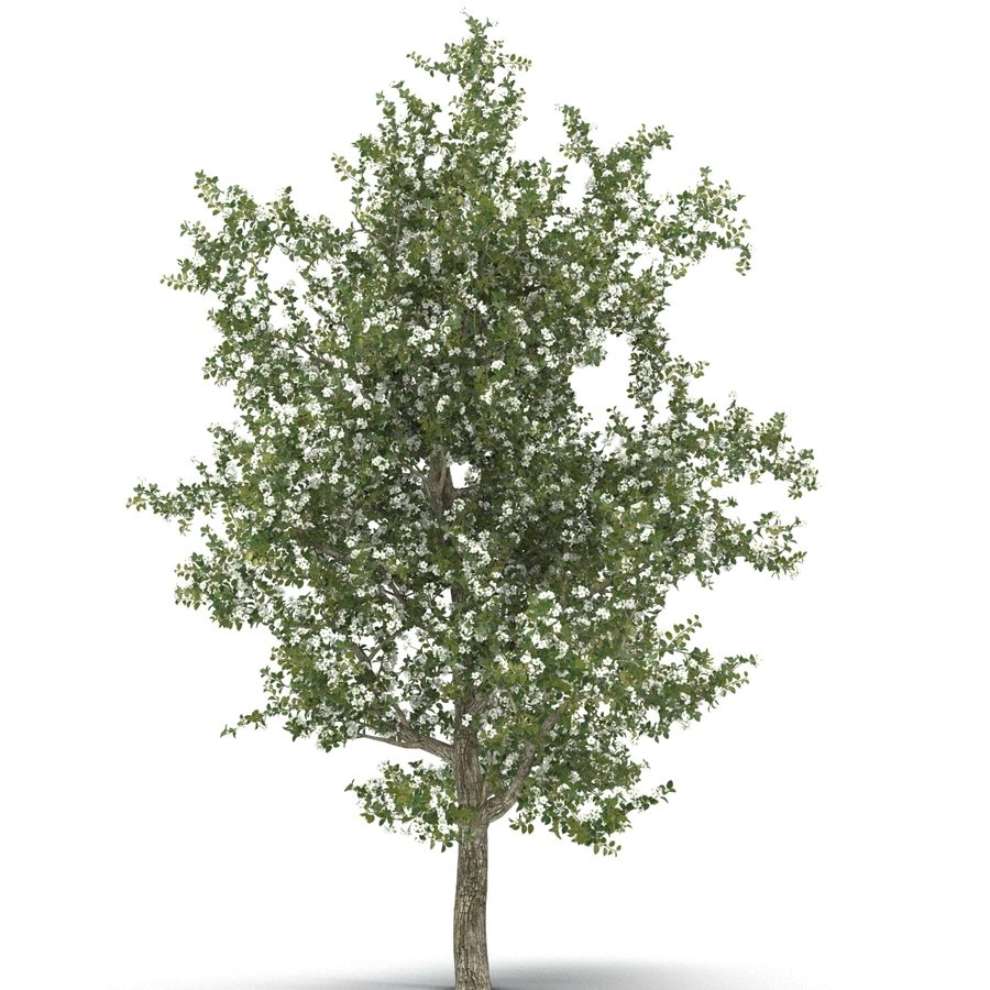 Perenboom Bloeien royalty-free 3d model - Preview no. 11
