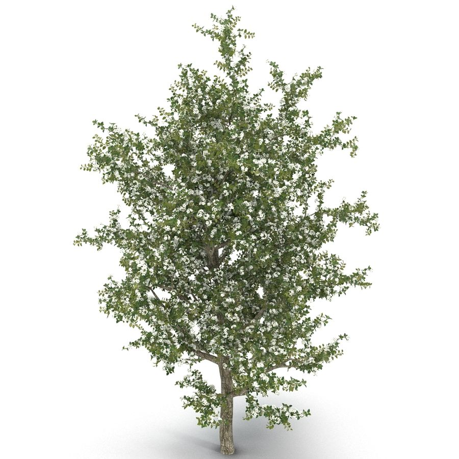 Perenboom Bloeien royalty-free 3d model - Preview no. 3
