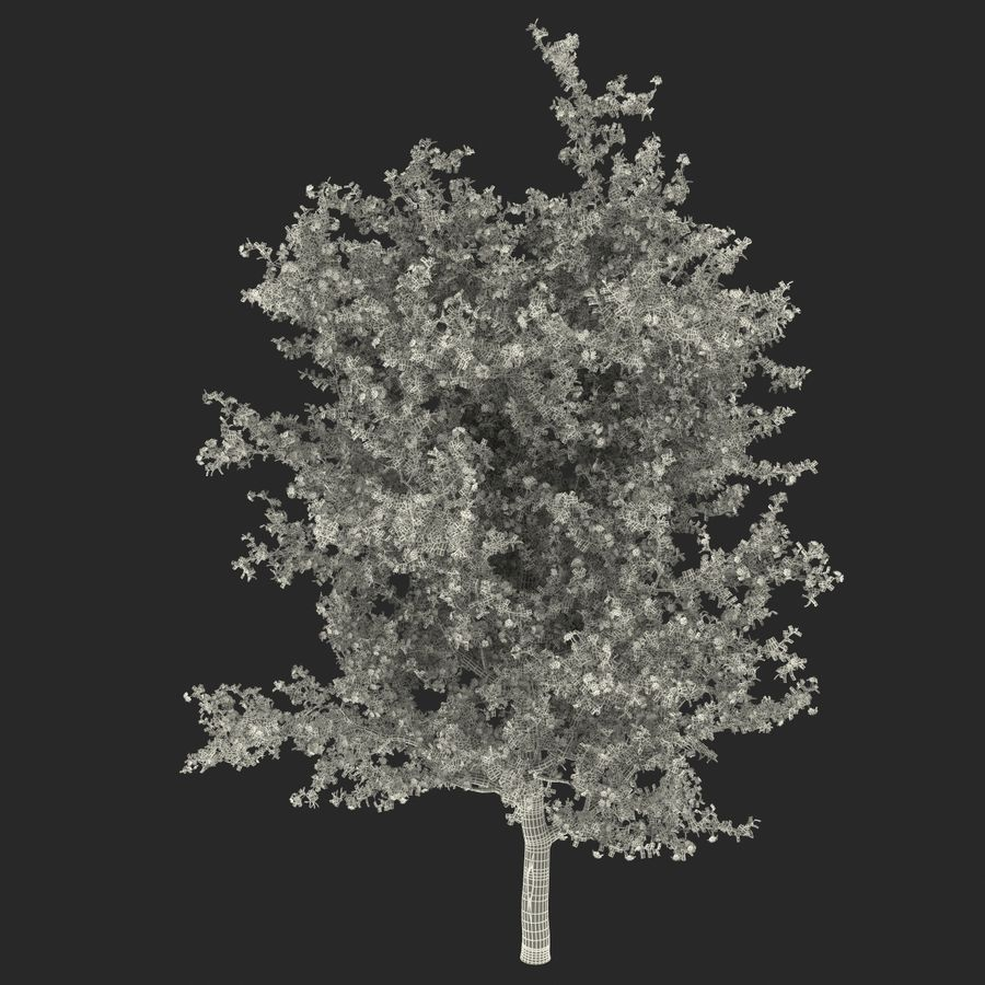 Perenboom Bloeien royalty-free 3d model - Preview no. 16