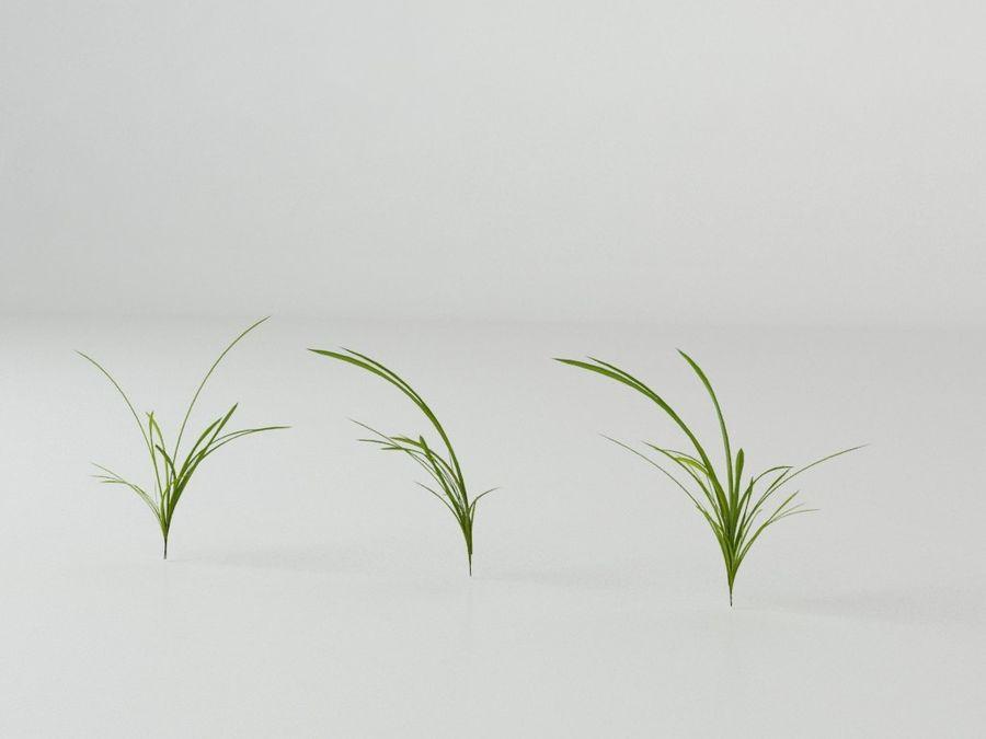 잔디와 식물 메가 팩 royalty-free 3d model - Preview no. 9