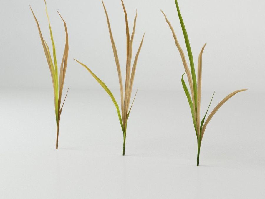 잔디와 식물 메가 팩 royalty-free 3d model - Preview no. 11