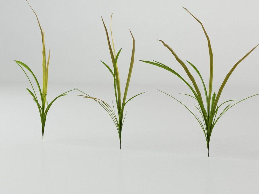 잔디와 식물 메가 팩 royalty-free 3d model - Preview no. 7