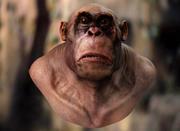 Apeman胸围 3d model