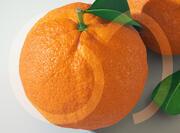 Orange frukt 3d model