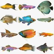 Colección de peces de agua dulce modelo 3d