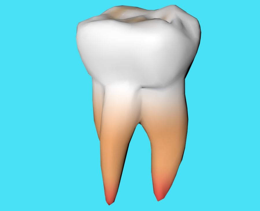 first molar royalty-free 3d model - Preview no. 1