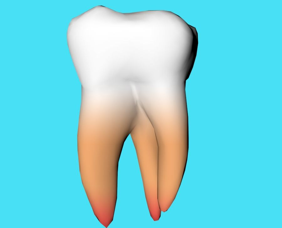 first molar royalty-free 3d model - Preview no. 3