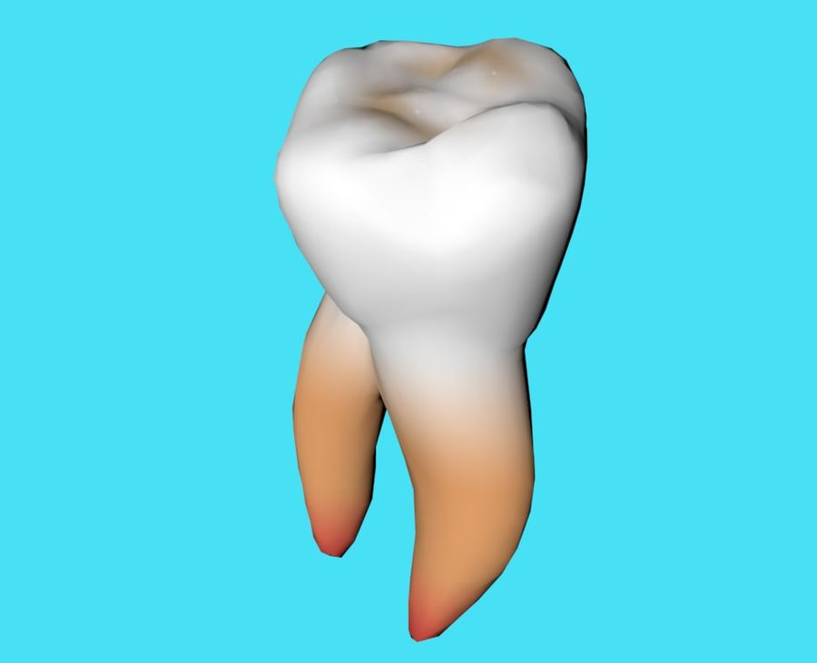 first molar royalty-free 3d model - Preview no. 2