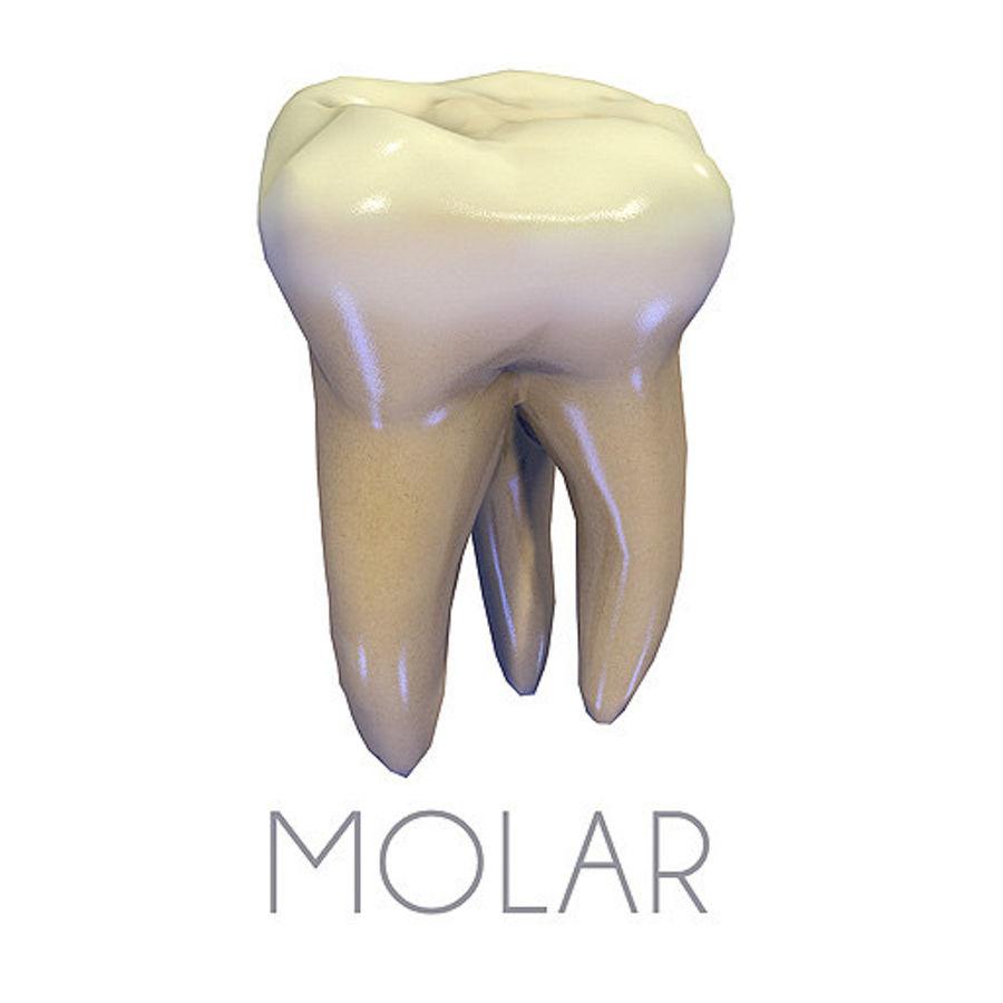 Zähne zweite obere Molaren royalty-free 3d model - Preview no. 1