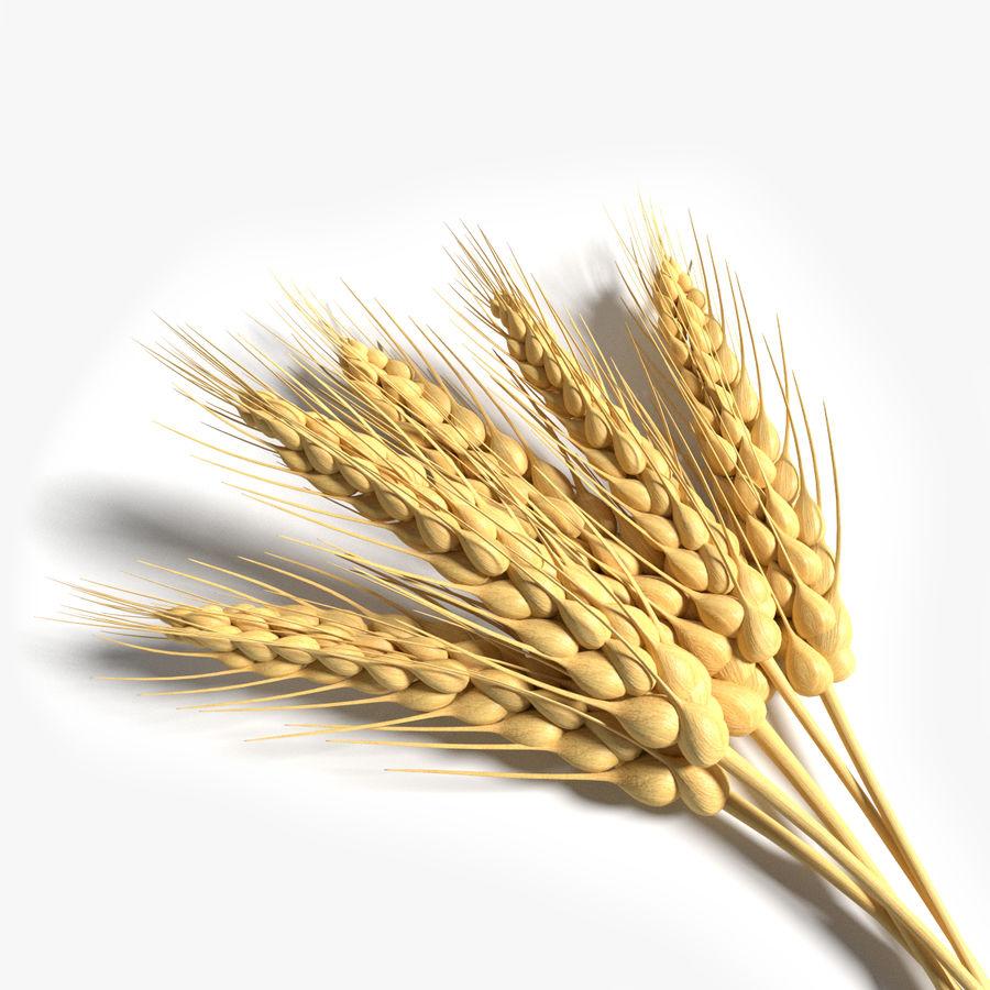 Wheat 3D Model $12 -  max  obj  fbx  dae  blend  3ds - Free3D