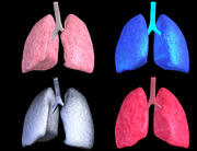 Lungs Animated 3d model
