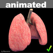 Animowane płuca 3d model
