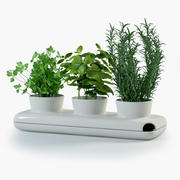 Herbs in Sagaform Pot 3d model