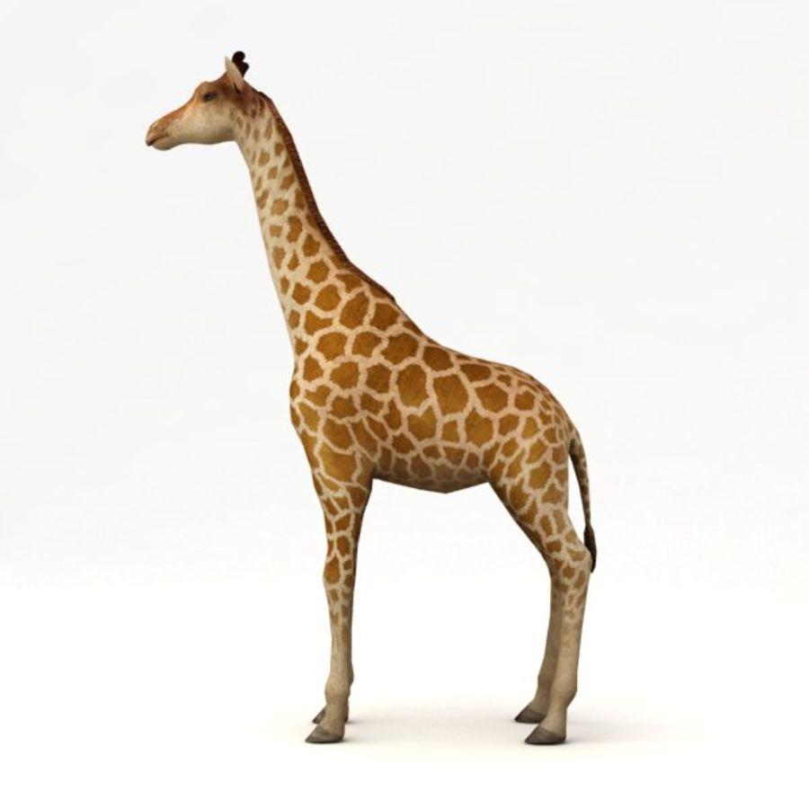 Giraffa armata royalty-free 3d model - Preview no. 4