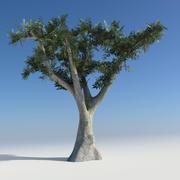 Maya Olive Tree 3d model