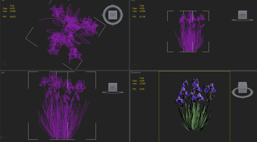 iris germanica flower royalty-free 3d model - Preview no. 6