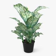 Planta de Dieffenbachia Picta 3d model