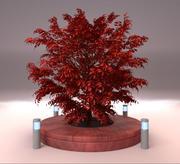 Burning bush tree form 2 3d model