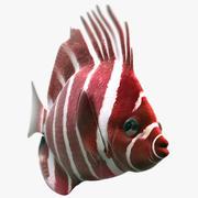 Pesce naso rosso 3d model