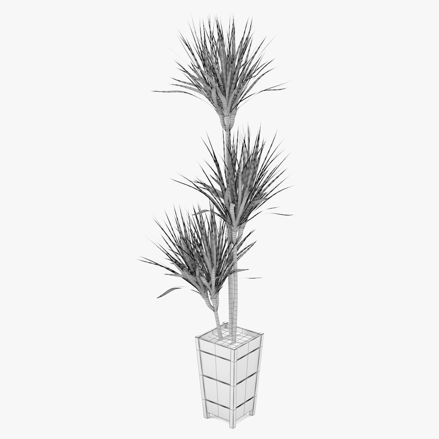 Dracaena Marginata Plant royalty-free 3d model - Preview no. 5