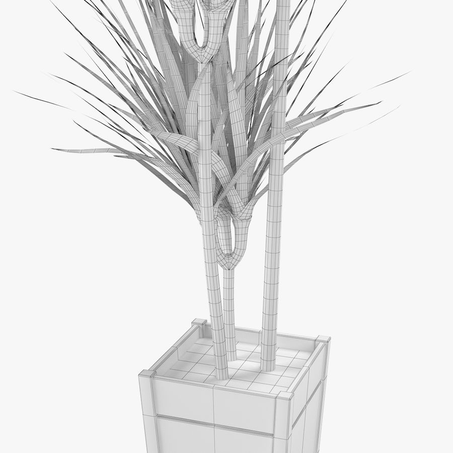 Dracaena Marginata Plant royalty-free 3d model - Preview no. 6