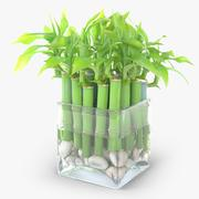 Lucky Bamboo Plant 3d model