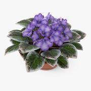 제비꽃 식물 3d model