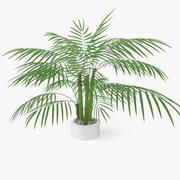 Pianta di palma 3d model