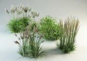 grass collection_1 3d model