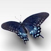 Spicebush Swallowtail 3d model