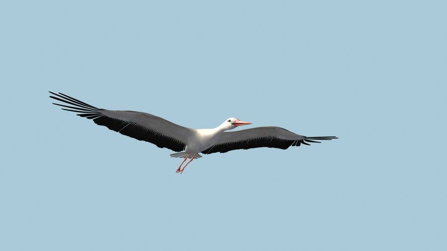 LOW POLY WHITE STORK 3D MODEL FULLY RIGGED & ANIMATED royalty-free 3d model - Preview no. 3