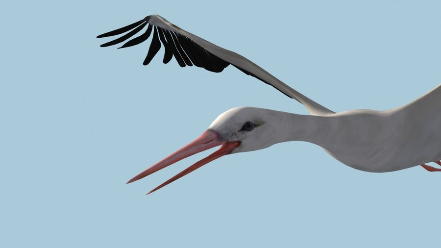 LOW POLY WHITE STORK 3D MODEL FULLY RIGGED & ANIMATED royalty-free 3d model - Preview no. 12