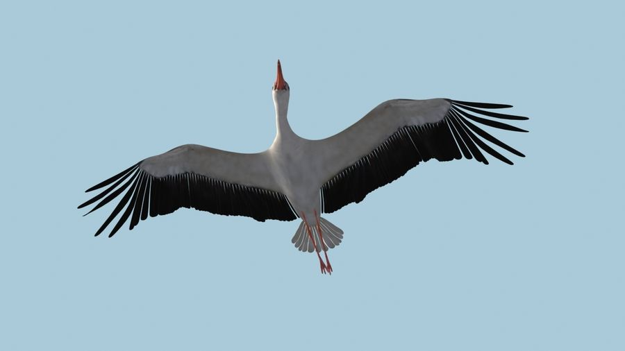 LOW POLY WHITE STORK 3D MODEL FULLY RIGGED & ANIMATED royalty-free 3d model - Preview no. 2