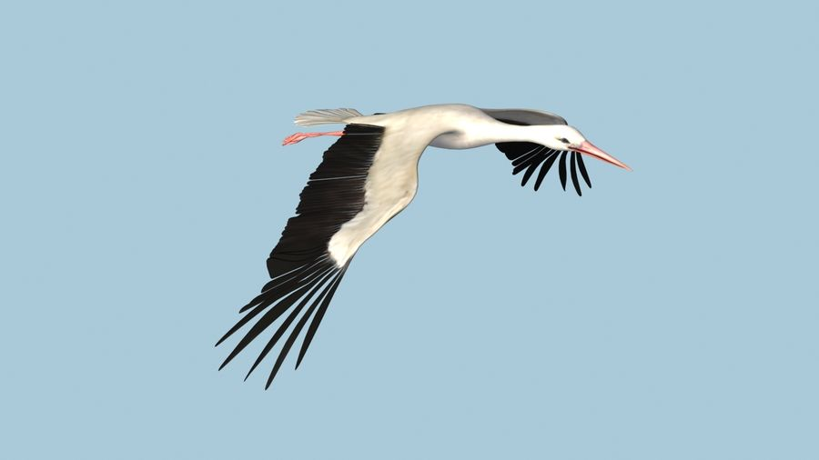LOW POLY WHITE STORK 3D MODEL FULLY RIGGED & ANIMATED royalty-free 3d model - Preview no. 14