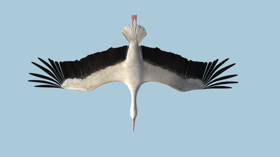 LOW POLY WHITE STORK 3D MODEL FULLY RIGGED & ANIMATED royalty-free 3d model - Preview no. 9