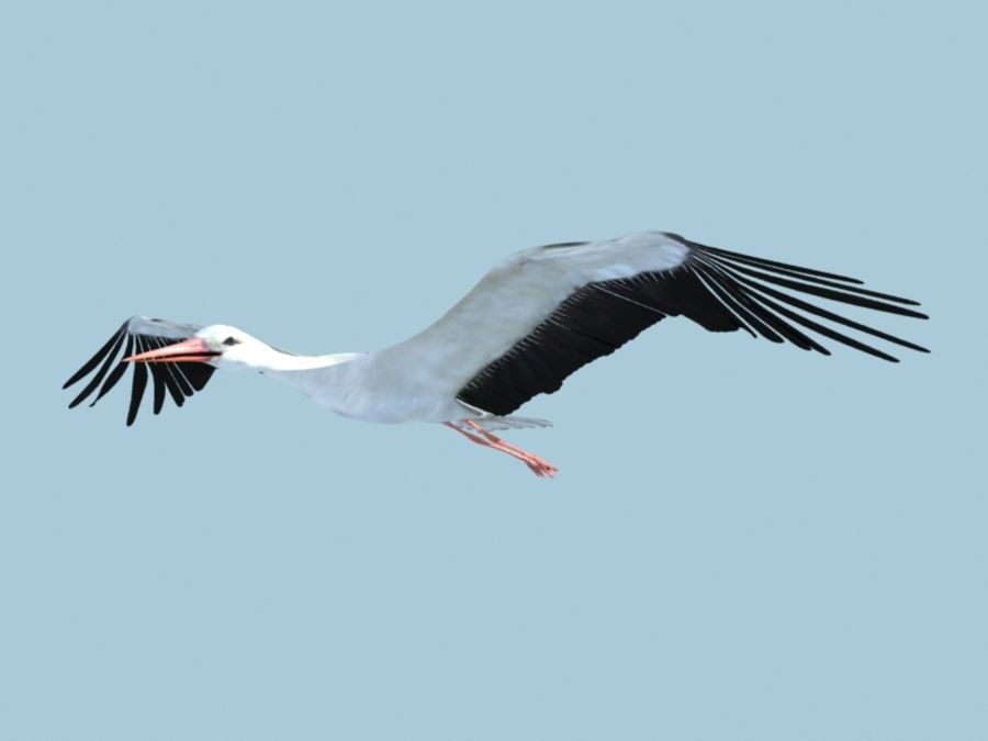 LOW POLY WHITE STORK 3D MODEL FULLY RIGGED & ANIMATED royalty-free 3d model - Preview no. 18