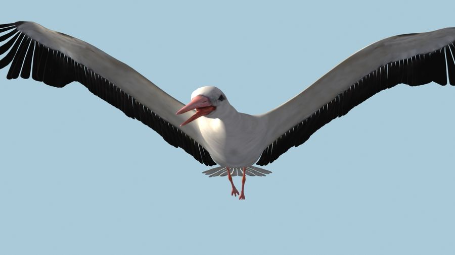 LOW POLY WHITE STORK 3D MODEL FULLY RIGGED & ANIMATED royalty-free 3d model - Preview no. 13