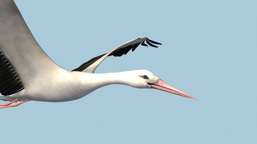LOW POLY WHITE STORK 3D MODEL FULLY RIGGED & ANIMATED royalty-free 3d model - Preview no. 4